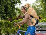 Hunde-Transport