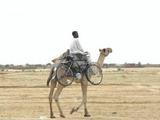 Kamel mit Fahrrad
