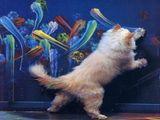 Künstlerische Katze
