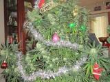 Weihnachtsbaum zum Rauchen