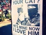 Süße Katze gefunden