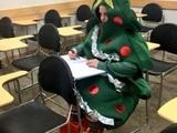 Weihnachtsbaum in Ausbildung