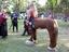 Pferdemensch